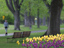 Spring park. Tulips in foreground, a girl walking in background stock image
