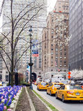 Spring Park Avenue Stock Photography