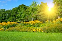 Spring park with beautiful flowerbeds and sun. Park with beautiful flowerbeds and sun. Spring landscape royalty free stock photography