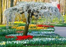 Spring park. Stock Image