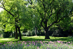 Spring park with flowers Royalty Free Stock Photos