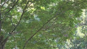 Spring park with green trees stock footage
