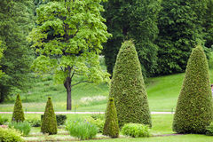 Spring Park with lawn with conical junipers. Sample of landscape design spring Park with lawn with conical junipers royalty free stock photo