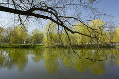 Spring park. Park next to the Novodevichy Convent is a favorite walk Muscovites stock photos