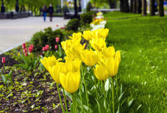 Spring in Park Royalty Free Stock Photos