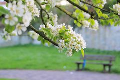 Spring in the park. A relax corner in the park during spring with flowers blossom Stock Images