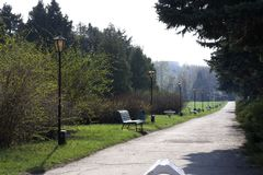 Spring Park with road and benches. Spring park, green parkway, spring alley path, blossom trees, perspective Stock Images