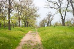 Spring Park and road to the sea. Dirt road to the sea through the spring Park Stock Photography