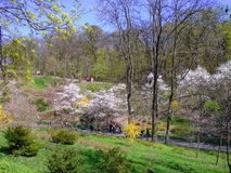 Spring Park Royalty Free Stock Images
