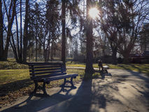 Spring in park with sun in treetops. At Prague Royalty Free Stock Images