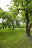 Spring Park. Trees and walking paths in the park in the spring. Photo landscape. On the ground growing green grass Stock Images