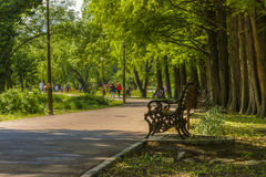Spring in the park royalty free stock images