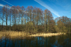 Spring in the parks and forests of Europe. Picturesque landscape Stock Photo