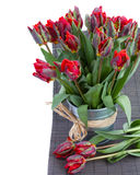 Spring parrot tulip flowers Royalty Free Stock Image