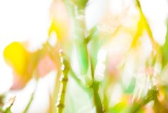 Spring pastel background texture - blurred meadow. Spring sunny background texture - blurred meadow. Fresh pastel colors, bright light with bokeh effect Royalty Free Stock Images