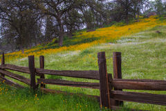 Spring Pasture. Spring Flowers In Lush Pasture With Rustic Wooden Fence In Foreground Royalty Free Stock Photo