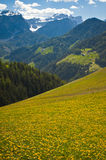 Spring Pastures In Dolomite Mountains Of Italy Stock Photography