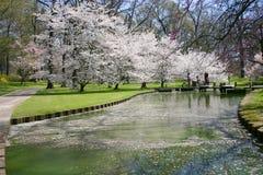 Spring Path Stock Photos