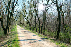 Spring path Royalty Free Stock Photography