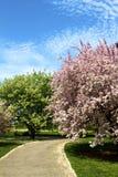 Spring Path Royalty Free Stock Photo