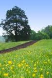 Spring Path Stock Image