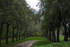 A spring path between the trees. Green trees align path deciduous wet New England spring stock photography
