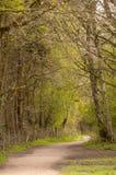 Spring Path. Stock Photos