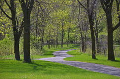 Spring. Path through the wood Stock Images