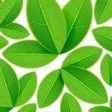 Spring pattern Royalty Free Stock Image