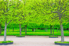 Spring in Petergof park (St. Petersburg, Russia) Stock Photo