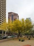 Spring in Phoenix Downtown, AZ Royalty Free Stock Image