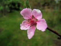 Spring. Royalty Free Stock Image