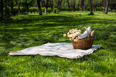 Spring picnic in a park Stock Images