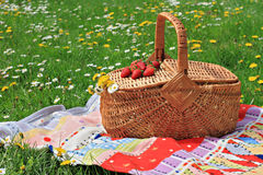 Spring picnic , Picnic basket and blanket on green grass in park, nature. Stock Photography