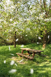 Spring picnic table. Under a blooming cherry tree, with flying petals Stock Photography