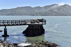 Pier Anchored by a Rock. This is a Spring picture of a pier extending out to a cove on San Francisco Bay anchored by a large rock located in Marin County Stock Photography
