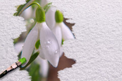 Spring picture with snowdrop. Stock Photography