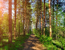 Spring picturesque forest landscape view of forest trees in sunny weather Stock Image
