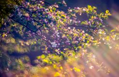 Spring pink blooming stock photography