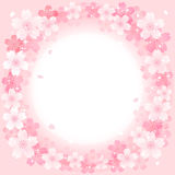 Spring Pink Cherry Blossoms Circle background Stock Photography