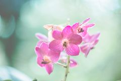 Spring pink flower. In close up royalty free stock images