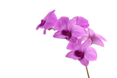 Spring pink flower Royalty Free Stock Images