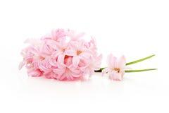 Spring pink flower Stock Images