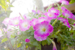Spring pink flowers color Royalty Free Stock Photos