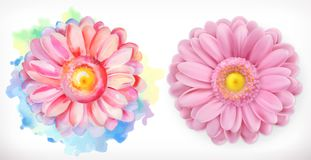 Spring pink flowers, Daisy, watercolor and 3d realism. On white background Royalty Free Stock Photography