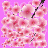 Spring Pink Flowers  on Pink Background. Royalty Free Stock Photography
