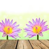 Spring pink lotus with green bokeh Stock Photography
