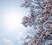 Spring pink tree stock photo