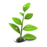 Spring plant. 3d illustration of spring plant growing through melting snow Royalty Free Stock Photography