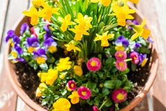 Spring plant arrangement in flower pot Stock Images